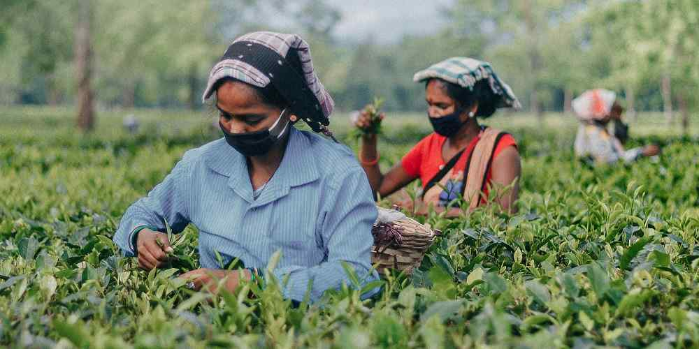 How Tea Made in a Small-Town VFW Is Helping Rebuild Haiti's Forests